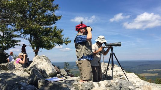 Hawkwatching from North Overlook at Hawk Mountain with JF