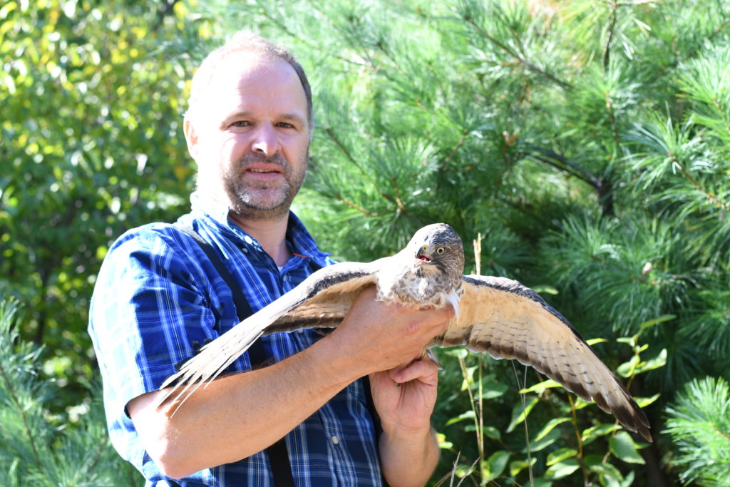 Eric with adult Broad-winged Hawk